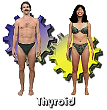 The Thyroid body type diet