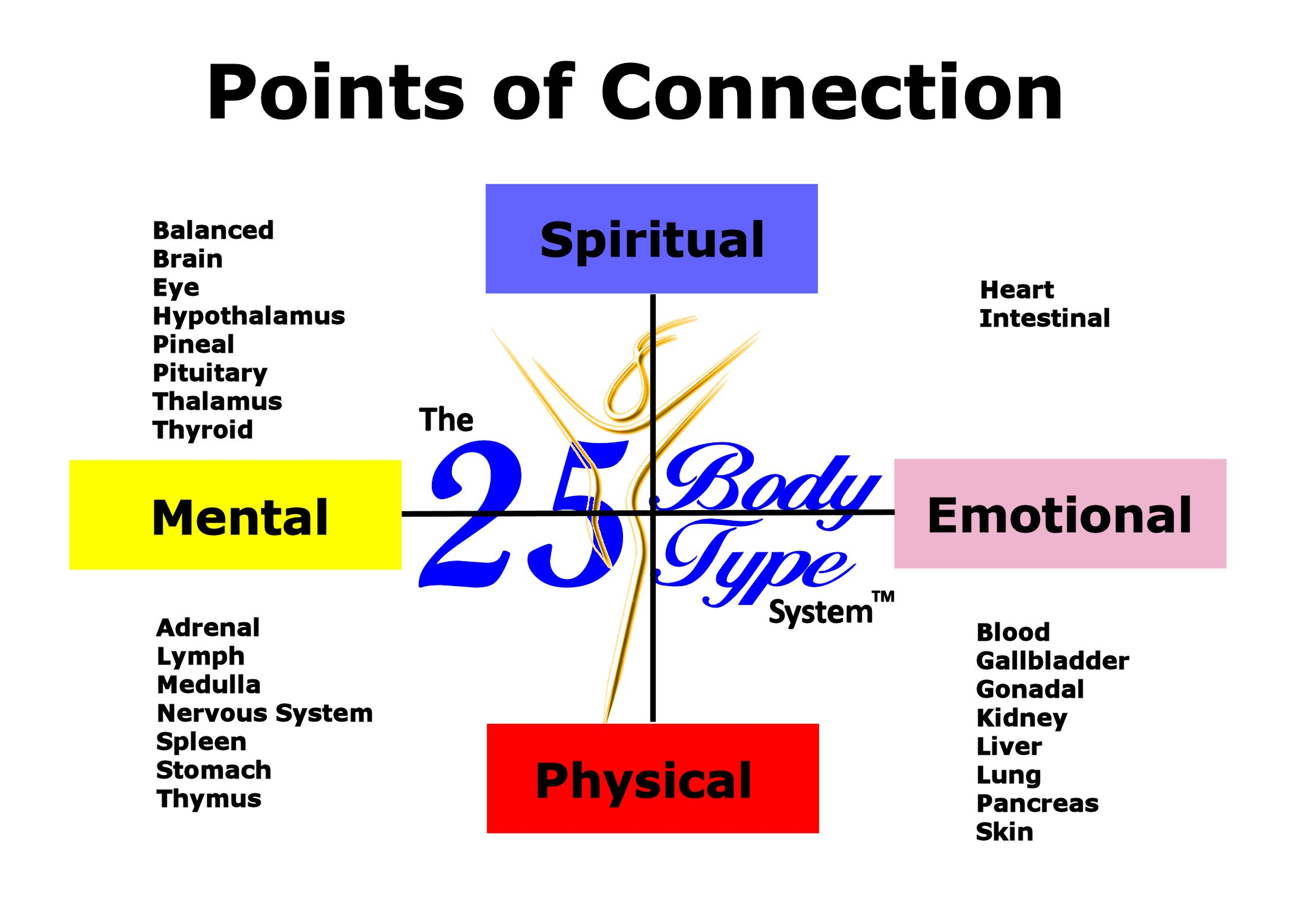 points of connection