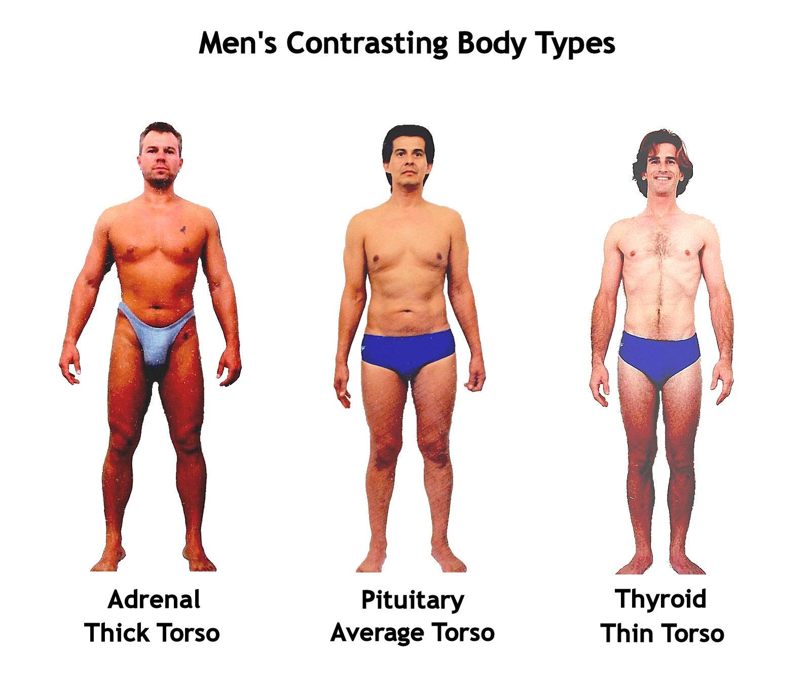 male_body_shapes.jpg